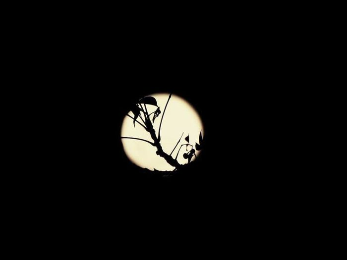 EyeEmNewHere Night Astronomy The Moon Vs Branches Silhouette Illuminated No Edit/no Filter The moon is friend for the lonesome to talk to.