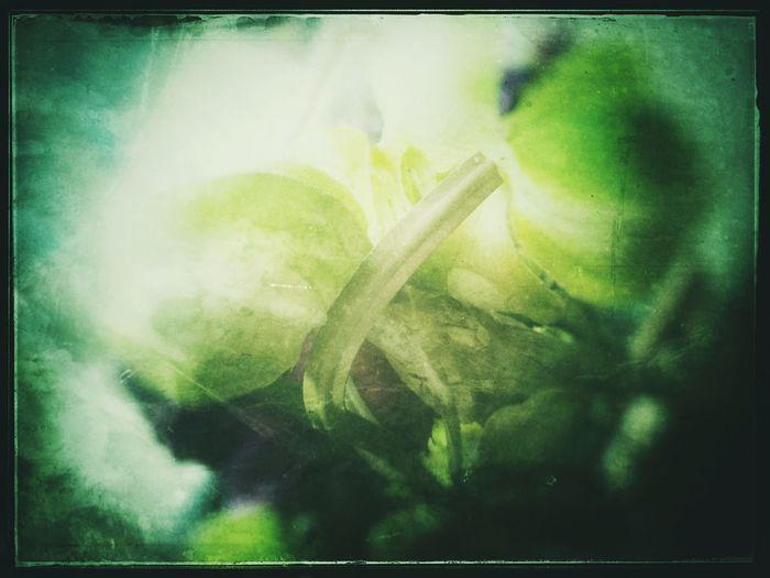 Gum Bichromate Alternative Process Greenhouse Veggies Fruit Green Grain Low-fi Film