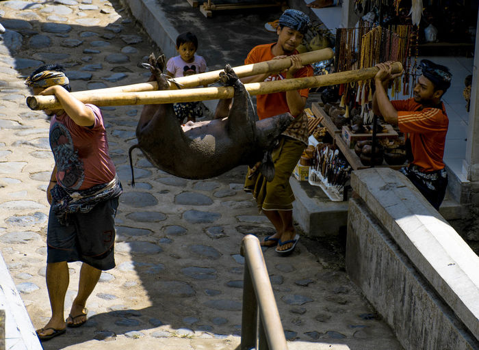 Bali, Indonesia Day Real People Occupation Men Working Group Of People Nature Water Animal