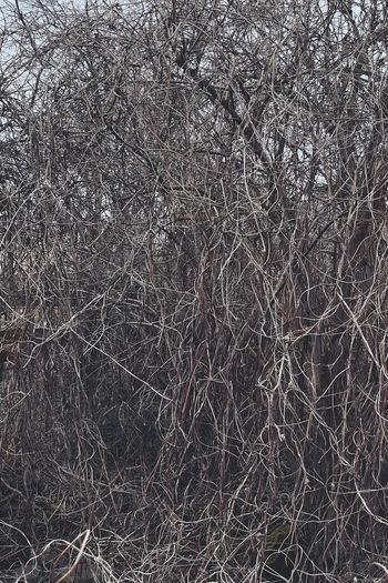 Full frame shot of bare tree