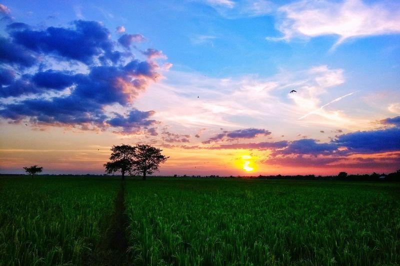 sunset near