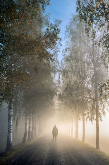 Idyllic landscape with walking man, birch alley, beautiful morning fog and light at autumn morning in Finland Tree Plant Real People One Person Direction Rear View Lifestyles Fog The Way Forward Leisure Activity Nature Beauty In Nature Men Outdoors Tranquility Autumn Finland Freshness Landscape Morning Light Misty Foggy Morning Misty Morning Standing Road