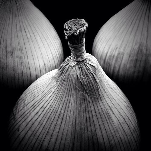 Competition Onions MalvernAutumnShow NEM Black&white NEM Still Life Shootermag