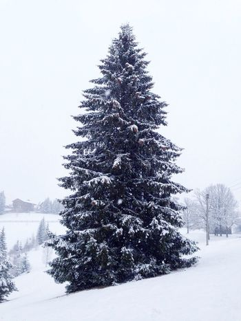 Карпаты Karpaty Winter Snow ❄ Snow Fir-tree Carpathians
