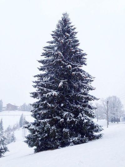 Карпаты Karpaty Winter Snow ❄ Snow Fir-tree Carpathians
