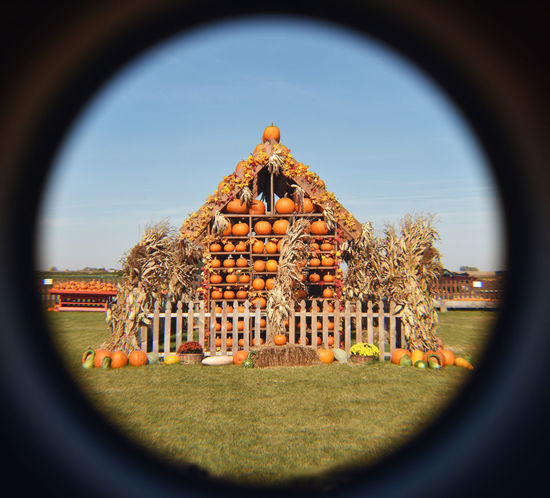 Halloween Pumpkin House Halloween Pumpkin House Pumpkins Architecture Built Structure Day Fish-eye Lens Focus On Background Grass Indoors  Nature No People Sky Tree