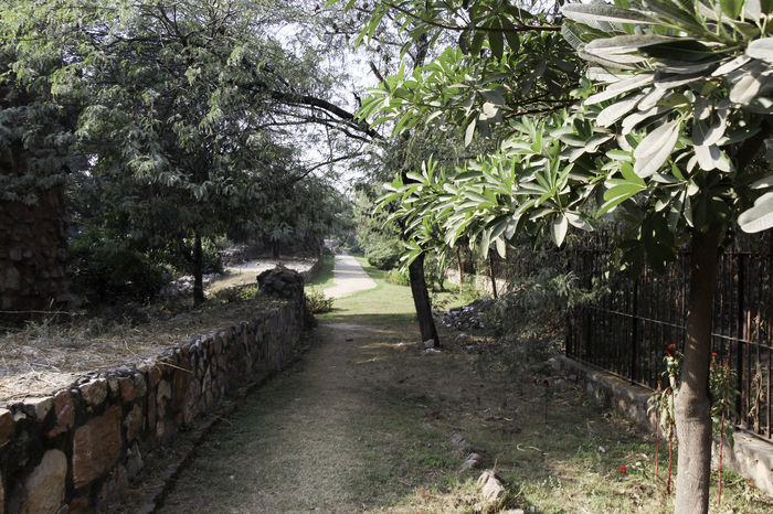 These are the ruins of the medieval Siri Fort in South Delhi, with a section of wall being visible and the stones that make up the wall, although this section of the wall surviving the centuries is pretty short. The fort was built by Alaudin Khilji to defend the core of his kingdom, primarily against the Mongols who were attacking the area. The fort helped in protection. In addition, the location of Siri where the supposed incident happened where the defeated Mongol army was brought and killed by trampling. These ruins are near Panchsheel Park and are set among greenery, the wall being many centuries old and yet standing firm in sections such as this. There is a fence all around the ruins, which is there to protect the ruins. in this image, the fence runs parallel to the ruins with a walking path in between. Boundary Wall Day Delhi Fence Green Greenery India Medieval Fort Medieval Structures Metal Fence Nature No People Outdoors Path Plant Plants Siri Fort Siri Fort Ruins Stone Wall Tree Walking Path Wall