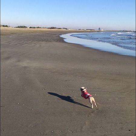 Beach Sand Sky Sea Dog Love 愛犬 九十九里 海