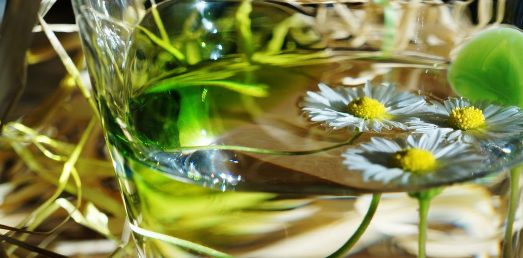 Close-up Cute Daisy Drinking Glass Easter Ready Floating Floating On Water Flower Focus On Foreground Fragility Freshness Full Frame Glass - Material Green Growth Indoors  Plant Raffia Reflection Refreshment Selective Focus Three Transparent Water Yellow Center