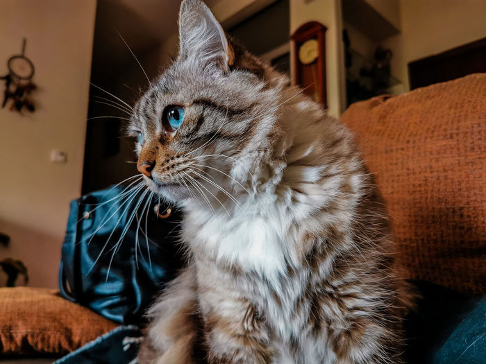 Close-up of a cat looking away at home