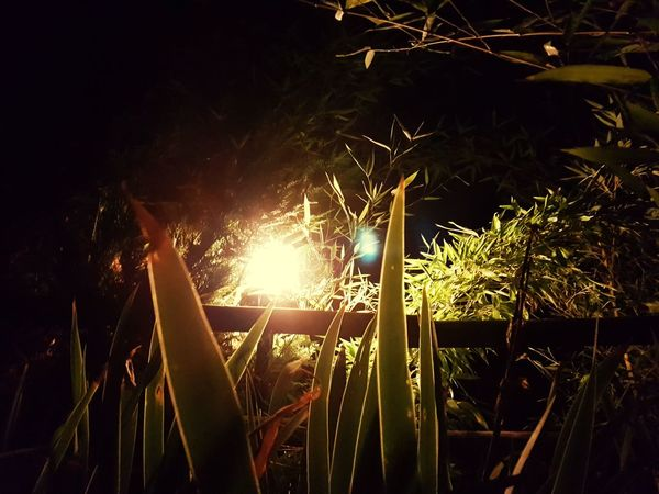 Night No People Outdoors Growth Nature Agriculture Illuminated Freshness Close-up