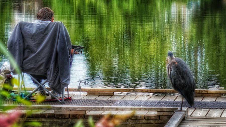 fishing buddies Photography Heron Water Lake Wildlife Capture The Moment