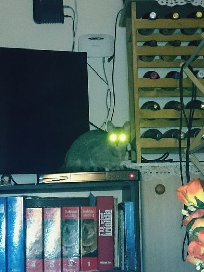 No People Indoors  Home Interior Bestmodel Mobile Photography Animal Themes One Animal Cat Cat♡ Catlovers Cats Of EyeEm Cats 🐱 Tv Electronics  WiFi Available Here Devils Cat Eyes Glowing Eyes Books Hungarian Books Home Home Sweet Home My Cat Housecat Zizi