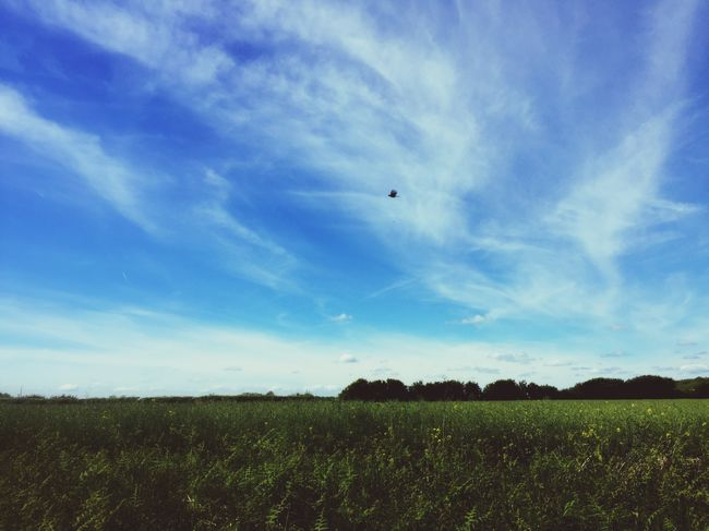 Sky Flying Field Mid-air Landscape Scenics Nature Tranquil Scene Beauty In Nature Agriculture Outdoors Tranquility Day Cloud - Sky No People Rural Scene Blue Growth Grass England Countryside