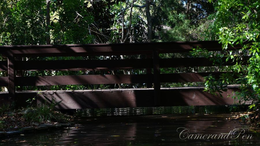 Little Bridge Nature Tree Water Outdoors Day No People Architecture Built Structure EyeEmNewHere Bridge Little Botanical Garden Decor