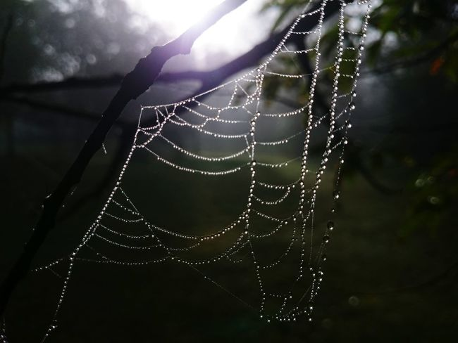 Spider web with morning dew... EyeEm Nature Lover Spider Web, Dew, Morning,