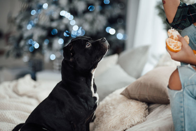 Dog looking away while sitting on sofa at home