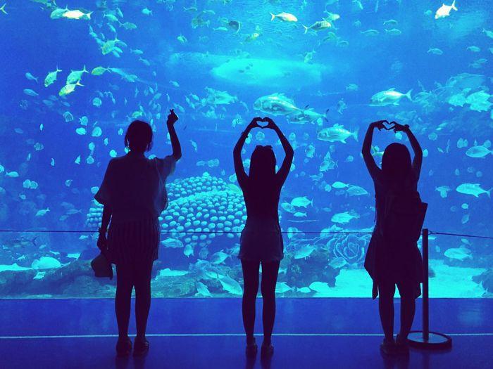 Silhouette Women Gesturing By Aquarium