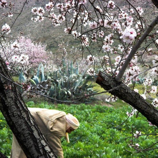 Le printemp proclame sa beauté aux portes de l'hiver ! View from : Ainsfa Oujda Maroc Morocco Loves_morocco Spring Beauty Winter Story Flower Nature Alamande Town Village Work Hard Human Meditation Inspiration Relaxe Relaxation Explore Hiking Mountain