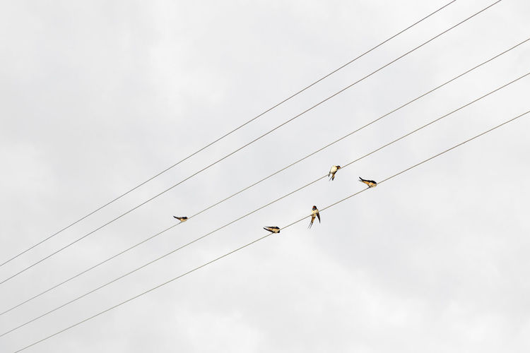 Low angle view of swallows perching on cables against sky