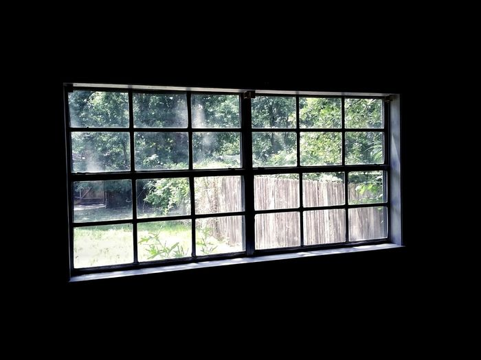 Looking Out Day Pattern Perspective Looking Through Window Window Tree Glass - Material Architecture Window Frame Frame Window Sill Geometric Shape Rectangle