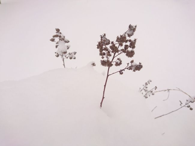 No People Nature Tree Branch Plant Day Close-up Outdoors Sky Cold Temperature Beauty In Nature Winterland Sweden Norrland Hälsingland Middle Of Sweden November Snowing Nature Snow Winter