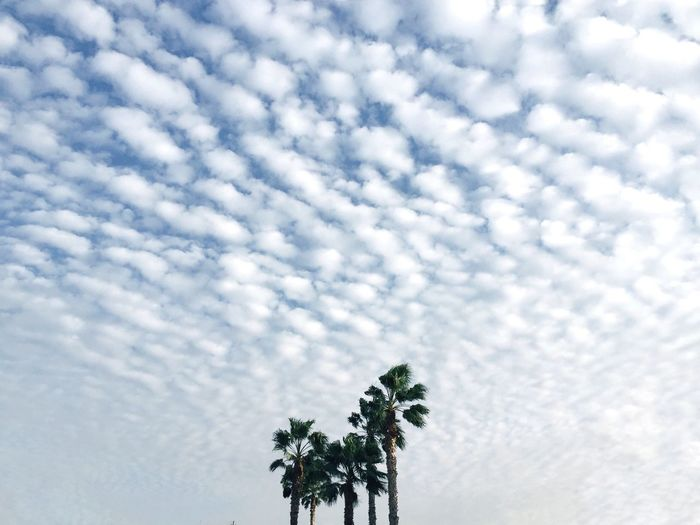 Low Angle View Nature Cloud - Sky Growth Tree Beauty In Nature No People Leaf Outdoors Palm Tree Day Eye4photography  מייסטריט Enjoy The New Normal Street Photography Street Embrace Urban Life Adapted To The City The Street Photographer - 2017 EyeEm Awards The Great Outdoors - 2017 EyeEm Awards