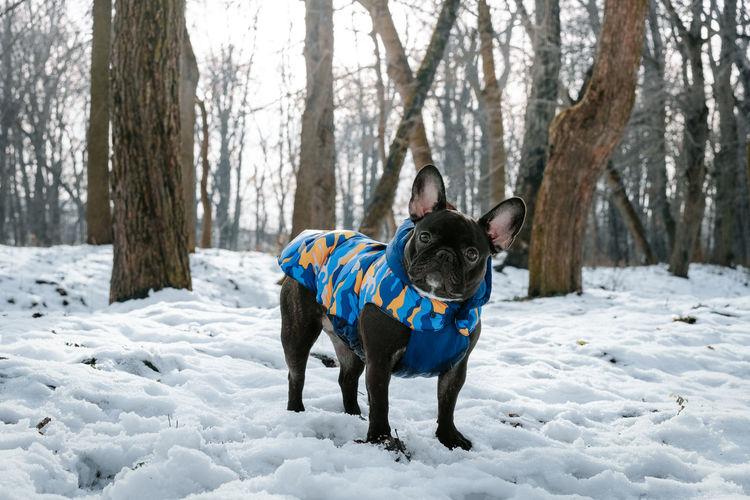 Full length of dog standing on snow covered land