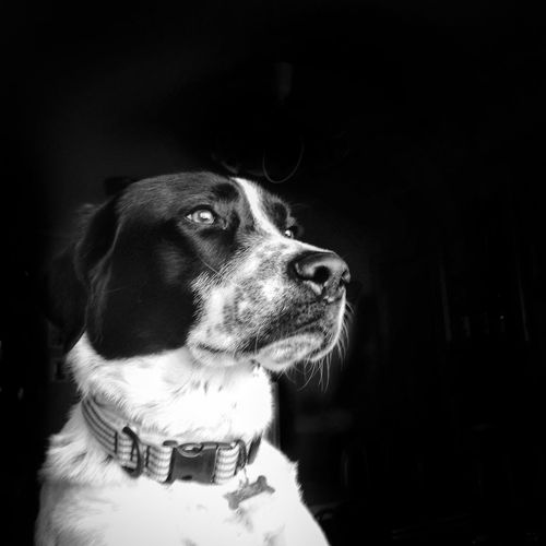 Look into my soul 🌟 Blackandwhite Photography Blackandwhite Animals Animal_collection Dog I Love My Dog Cute Pets Portrait Somosfelices