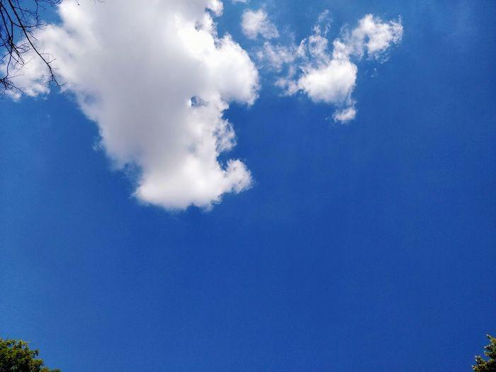 Cloud - Sky Clouds And Sky Clouds And Sky Freedom Berlin Vacations Summer Blue Tree Sky Close-up Cloud - Sky