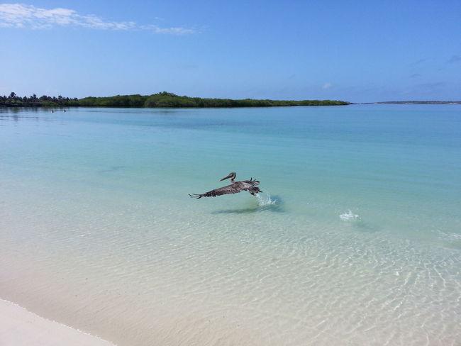 Pelícano en Tortuga Bay. Life Is A Beach Mauriciojacome Enjoying Life Lanscape