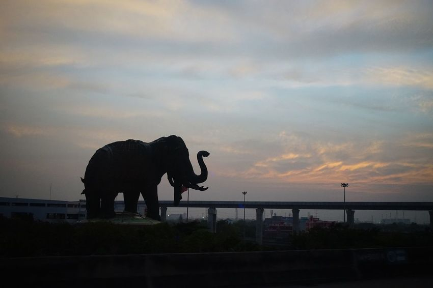 Sky Sky Sunset Nature One Animal Elephant Silhouette Animals In The Wild Animal Themes Cloud - Sky Animal Wildlife Mammal Outdoors Beauty In Nature Tusk Day