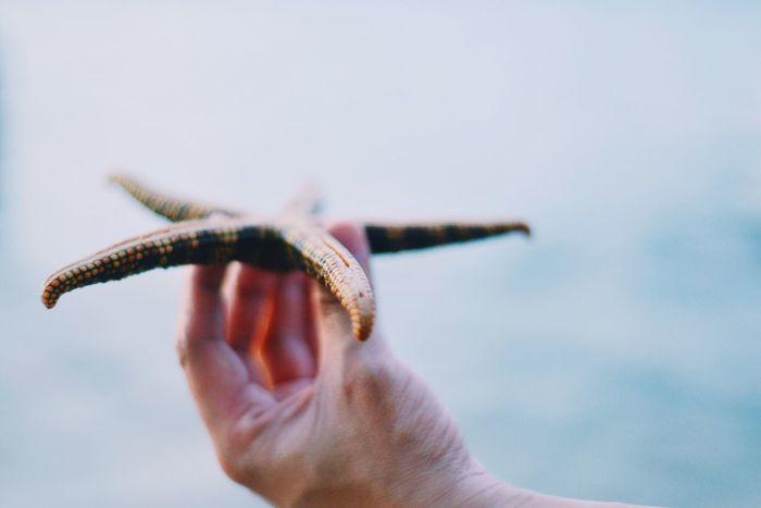 Starfish ⭐️ Starfish  Beach Summer Macro Macro_collection Eyeem Philippines Sea
