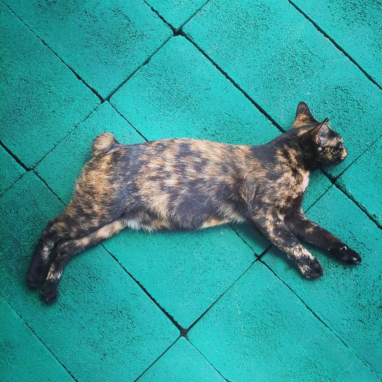 Life is about lying relaxed on green concrete blocks. Cat Sleeping Sleeps Tortie Tortiecat Furry Pet Fur Hairry Soft Green Blocks Concrete Background