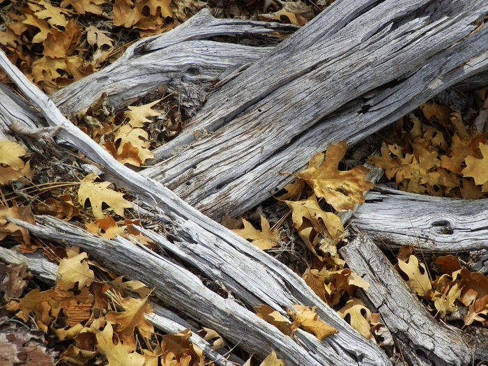 Dead wood, and fallen leaves Ash Grey Wood Autumn Colors Autumn Leaves Close Up Nature Dead Wood Fall Beauty Fall Leaves Fallen Leaves Golden Leaves Litter Mountain Floor Nature Nature Photography Naturelovers Yellow Color