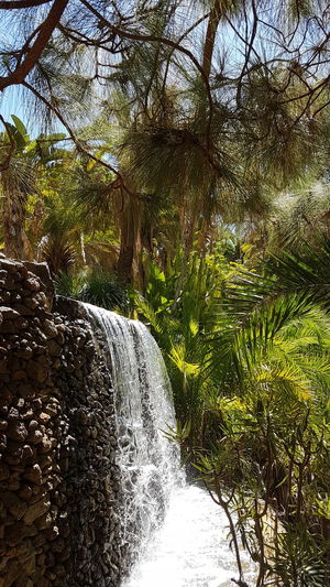 Palmitos Park Nature Water Day Outdoors Beauty In Nature Freshness Tranquility No People Tree