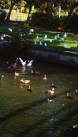 Animal Love Birds🐦⛅ Bird Photography Ducks &seagulls Beautiful View Birds_collection Birds Of EyeEm  Birds Wildlife