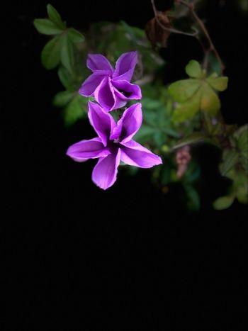Flower Petal Nature Flower Head Blooming Growth