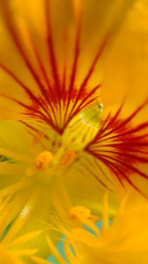 Backgrounds Beauty In Nature Blooming Close-up Extreme Close-up Flower Flower Head Fragility Freshness Full Frame Growth Macro Macro Beauty Macro Photography Macro_flower Nature Petal Plant Pollen Selective Focus Single Flower Stamen Vibrant Vibrant Colors Yellow