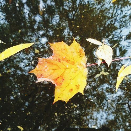 кленовый листья желтыелистья Осень 🍁🍂 Природа September Сентябрь природа, река, красиво