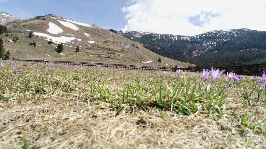 Summer Exploratorium Mountain Flower Rural Scene Agriculture Field Crop  Sky Grass Landscape Plant