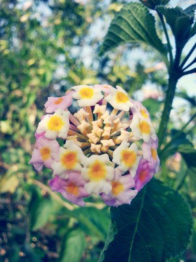 Flowerporn Amazing Colour Beautiful Nature Photography