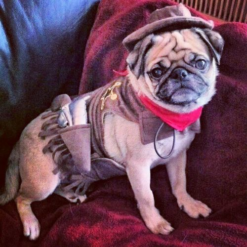 Who needs swaqq when you're a deputy pug. Puglife Straightpugingit Aintnobodygottimefordat Swaglaterpugnow thispugistoocoolforswag pug pugs deputy sheriff