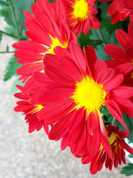 Flowers Plant Autumn Flowerslovers Japan Tokyo Beauty Beauty In Nature Nature Flower Photography Iloveflowers Petal 植物 秋 東京 花 赤い花
