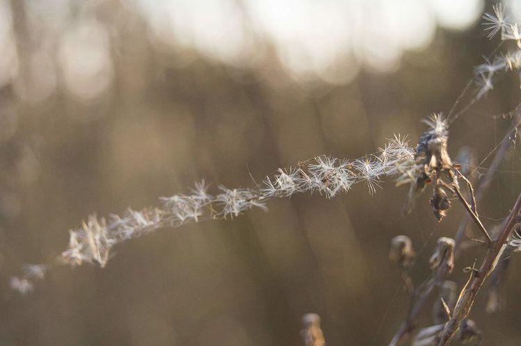Bokeh Depth Of Field No People Fluff Spider's Web