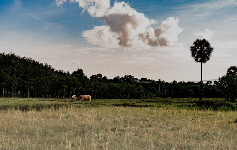 View of horse on field against sky