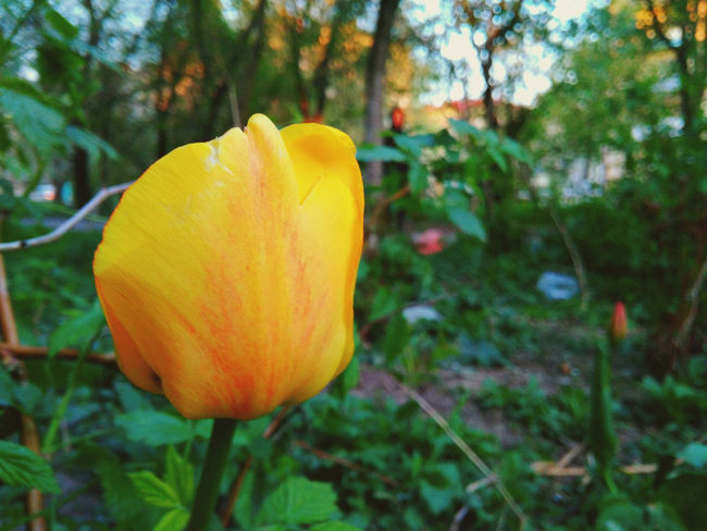Flower Flower Nature Plant Beauty In Nature Yellow Day Luts'k Lutsk Ukraine Xiaomi Xiaomiphotography Xiaomi Redmi 4a