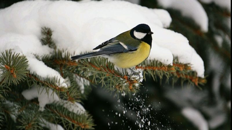 AngryBird Angry Bird Winter Wintertime Cold Winter ❄⛄ Winter Trees Snowy Hello World My Winter Favorites Today ♥