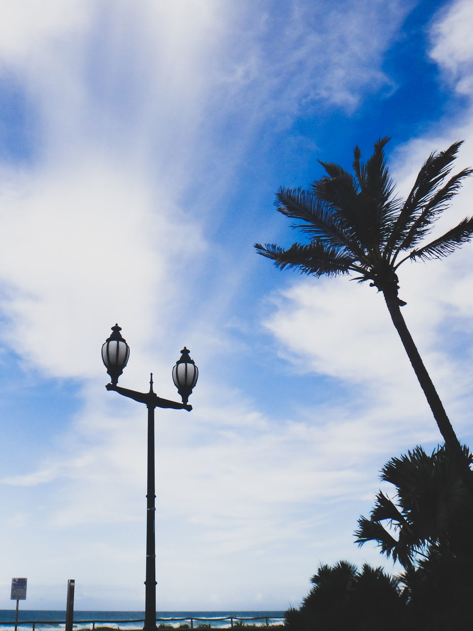 cloud - sky, sky, street light, low angle view, outdoors, no people, palm tree, day, bird, animals in the wild, nature, animal themes, perching, beauty in nature, tree