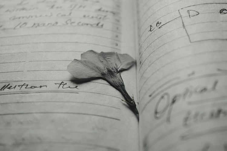 Close-up of dry flower on book